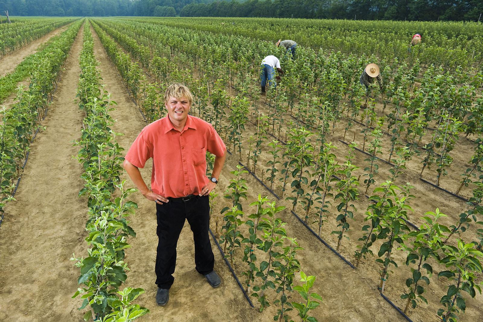 Farmer stands in apple tree field in fruit farm Elgin, Ontario